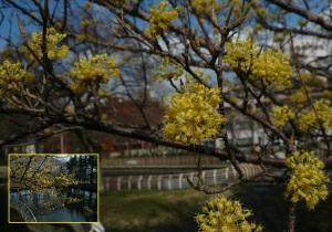 葉がなくて?枝に丸い形の花が面白い