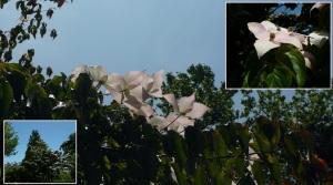 白い花でいいような気がする