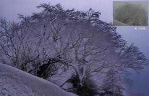 木に付いた雪が面白いかなと