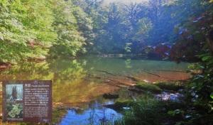 森の中に水の音