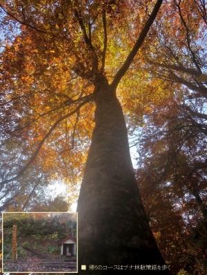 大きな木がいっぱい